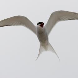 tern-by