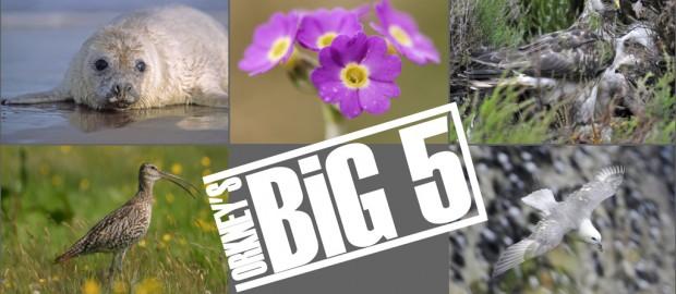 Big-5---photo