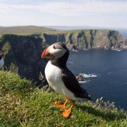 shetland_wildlife - John Samson