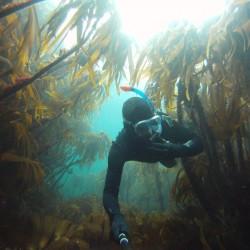 snorkel orkney - Scott Johnston 2013
