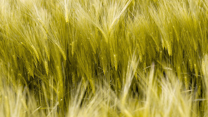 arbikie-crop-2-900x600