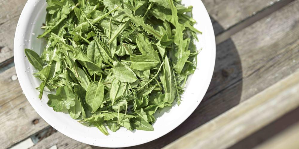mixed_wild_saladgreens