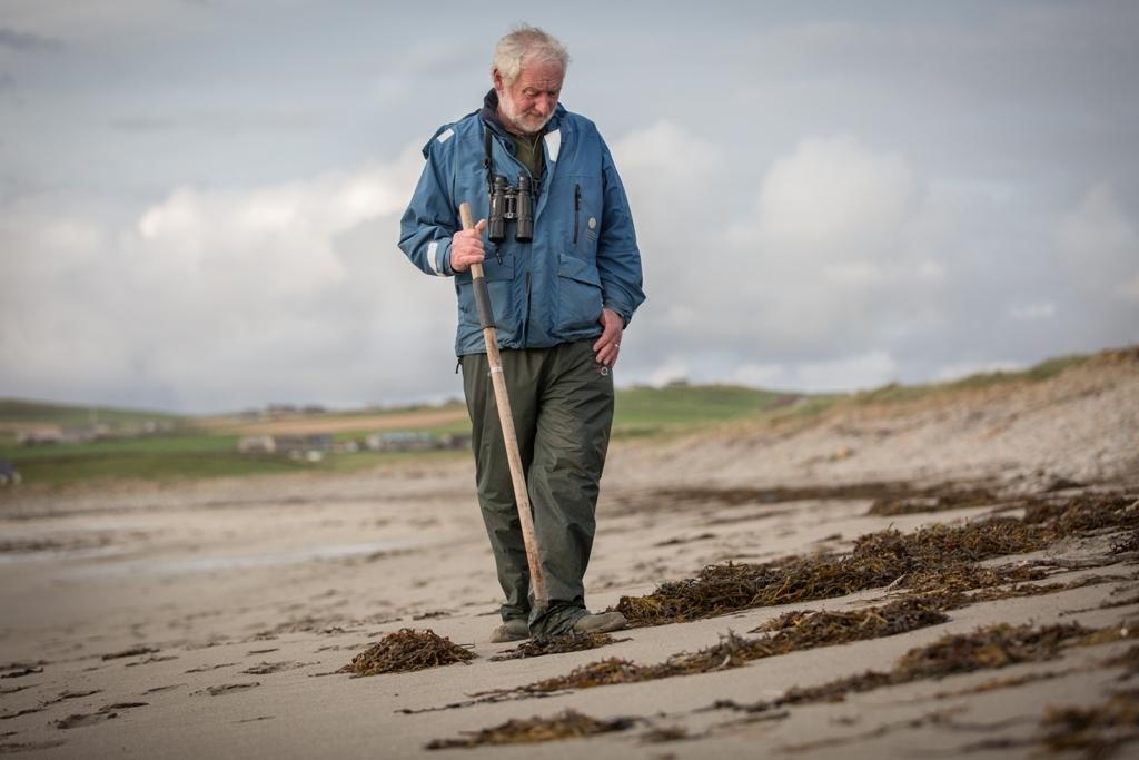Martin beachcombing