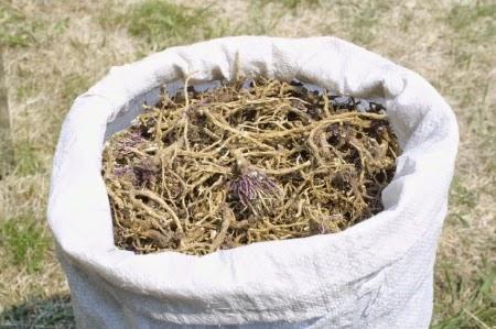 Dried Seneca root