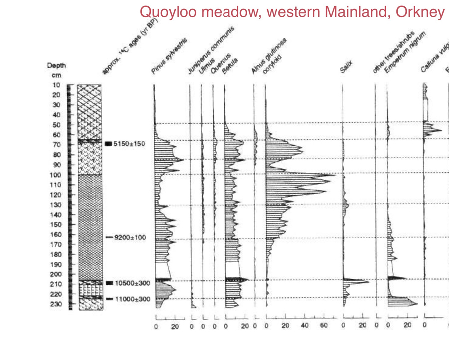 Quoyloo meadow